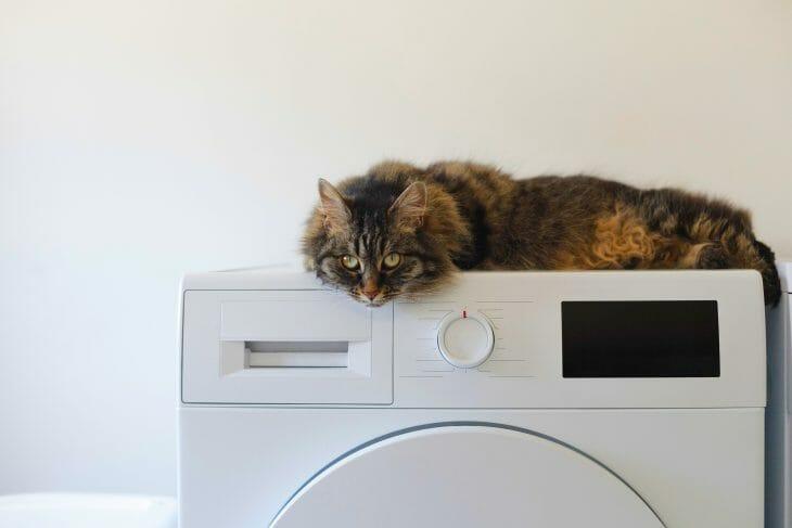 Кот лежит на стиральной машине Атлант