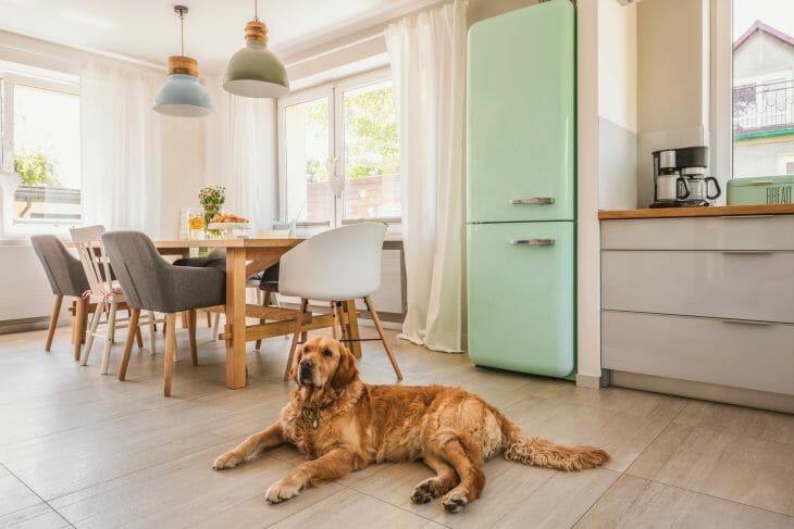 Собака возле холодильника Позис