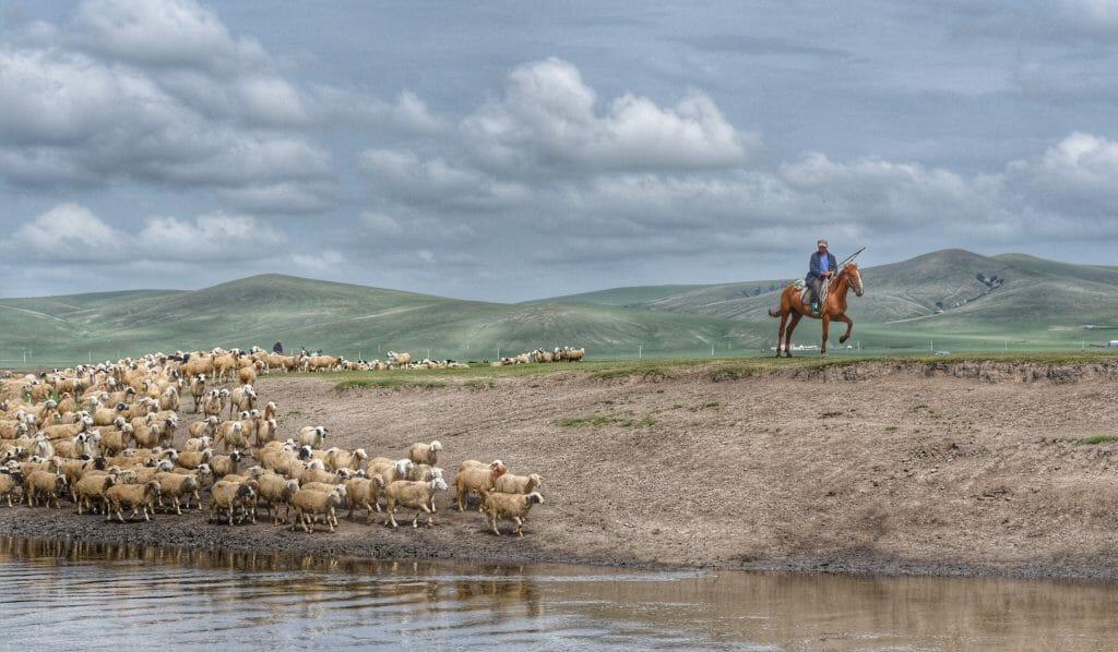 В степях Монголии