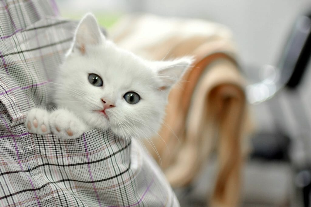 Котенок в кармане рубашки