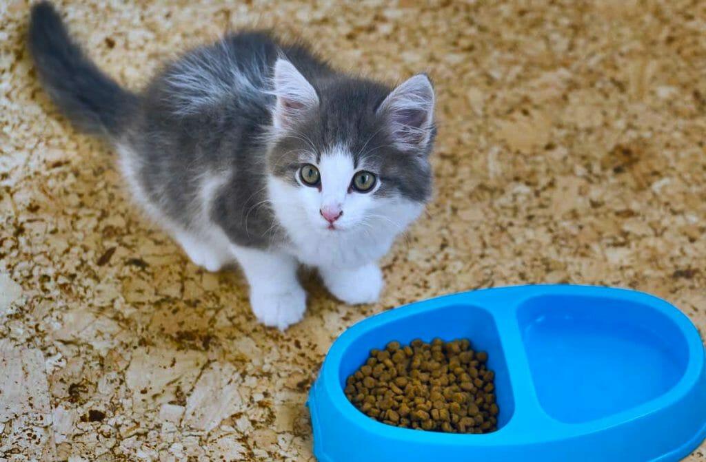 Котенок возле миски з сухим кормом