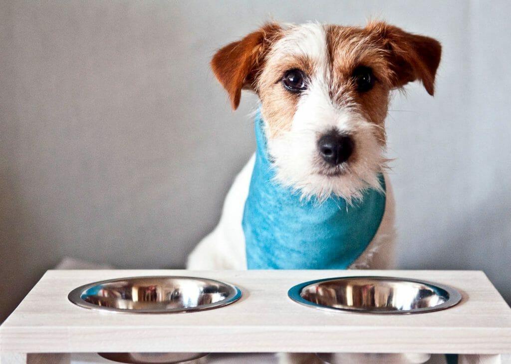 Собака возле мисок с едой и водой