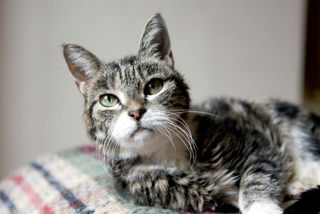 Взгляд старого кота