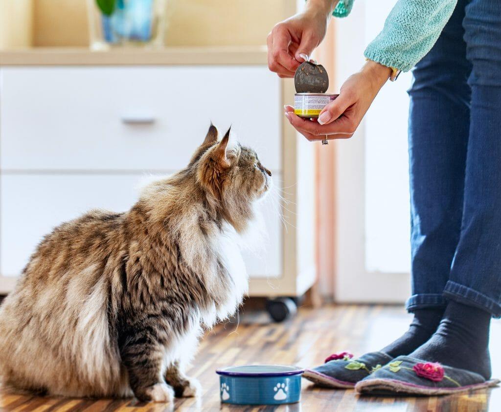 Женщина кормит кошку консервами