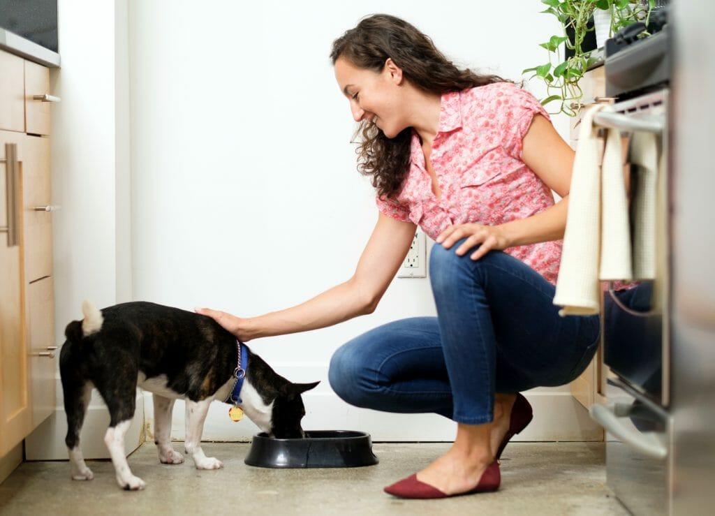 Женщина смотрит как небольшая собака ест с миски