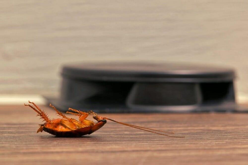 Таракан возле приманки